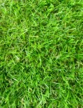 artificial olympic grass